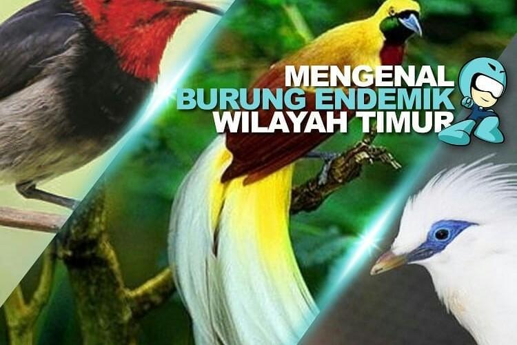 burung endemik indonesia